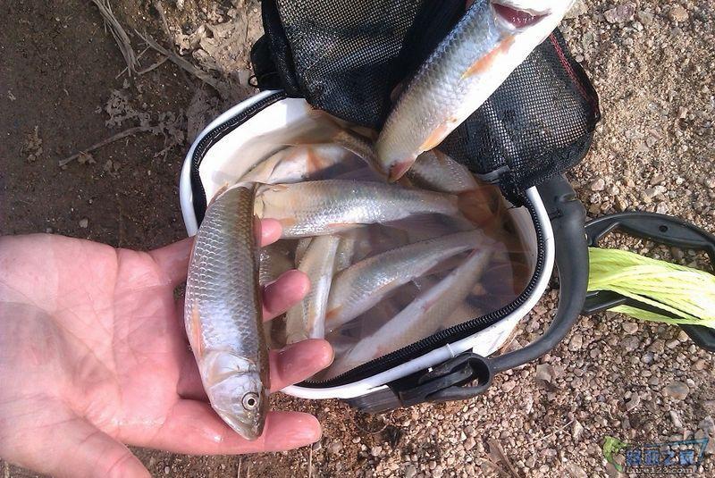 渔获.jpg