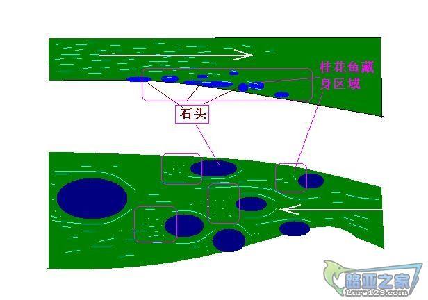 河流桂花鱼图.JPG