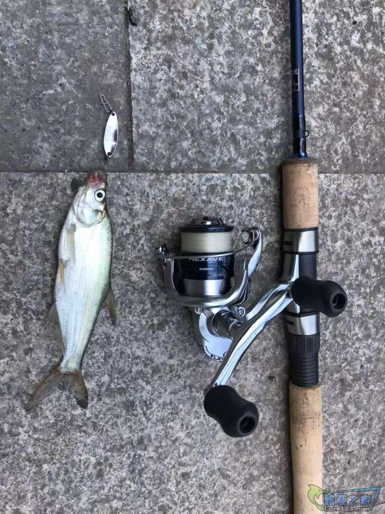 鱼是小了点,但都叫鱼