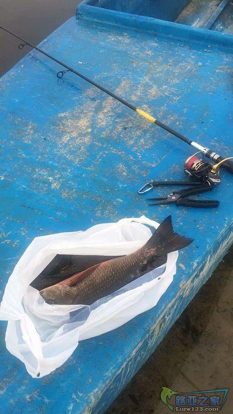 竿子断了,碰上三斤多的鱼,百八十块钱的竿子就得小心了。
