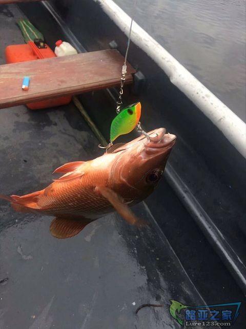 最近玩VIB比较多,中鱼也比较多,主要是VIB的颤动感比较直接,老伙子手懒,在河里也不抛竿,一律拖钓。 ...