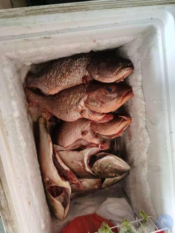 当天就杀好,放在冰柜里