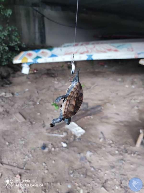 打龟回家,龟气爆满