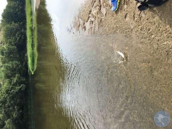 小溪里有巨物